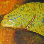 Andrew Pemberton_ Fish Painting REEF FISH (1)