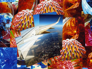 Collage with airplane wing and native flowers